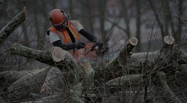 Murfreesboro Tree Service